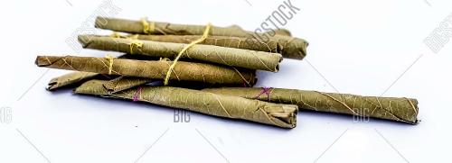 [Image: eucalyptusbidis.jpg]